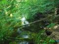 1 Rzeka Drawa