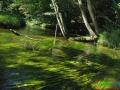 15 Rzeka Drawa