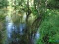 17 Rzeka Drawa