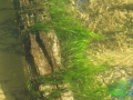 19 Rzeka Drawa
