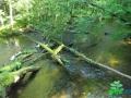 6 Rzeka Drawa