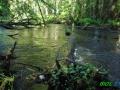 9 Rzeka Drawa
