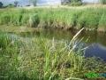 10 Rzeka Łasica.JPG