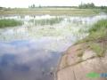 4 Rzeka Łasica.JPG