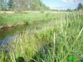 9 Rzeka Łasica.JPG